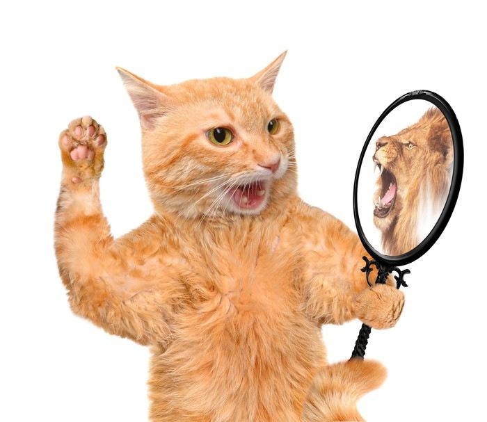 鏡を見て手を挙げる猫