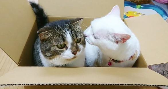 話しかける白猫