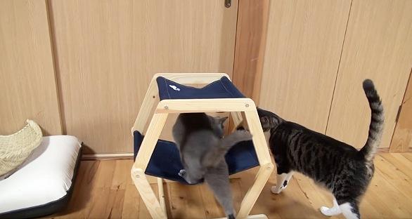 ハンモック下段に登る黒猫