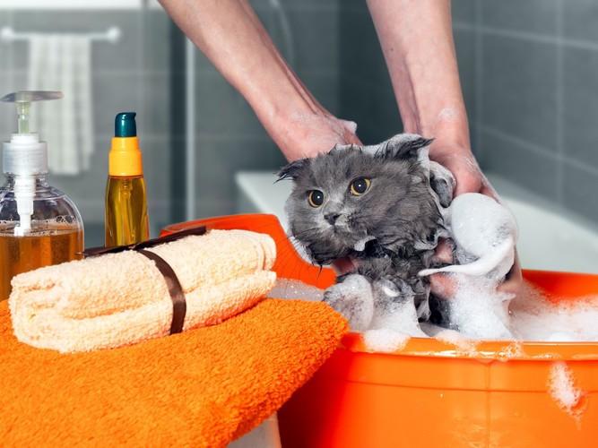 お風呂に入っている猫