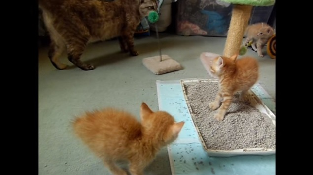 威嚇する3匹の子猫(奥に大猫)