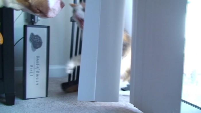 振り向き怒る猫