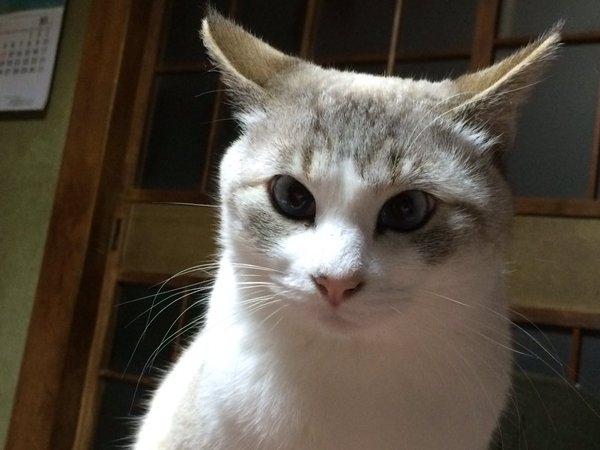 野良猫か・・・!