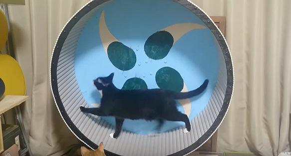 回し車で歩く黒猫