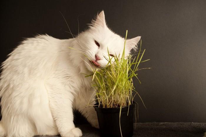 草にほほを寄せる猫
