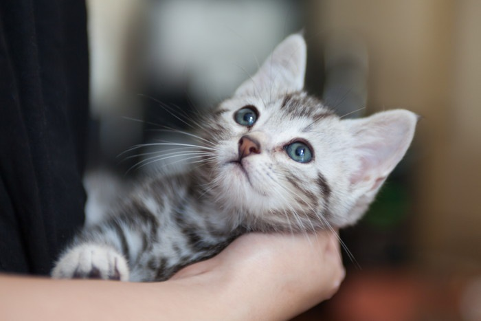 抱きかかえられた猫