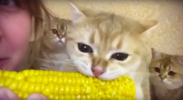 飽きれる猫達