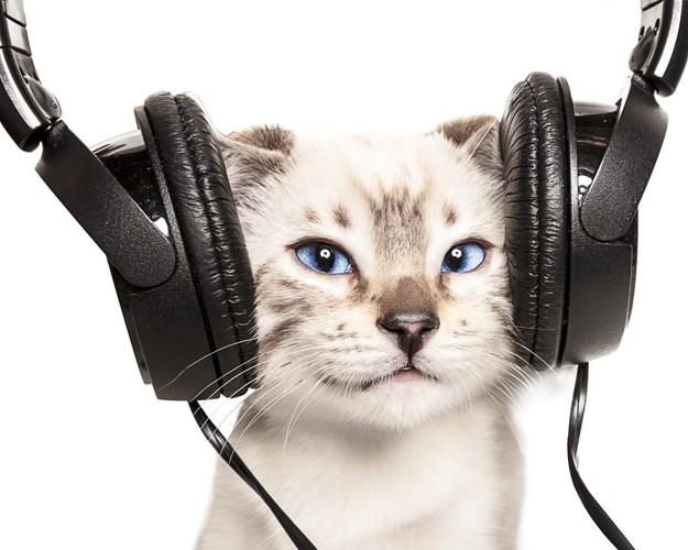 ヘッドフォンをする猫