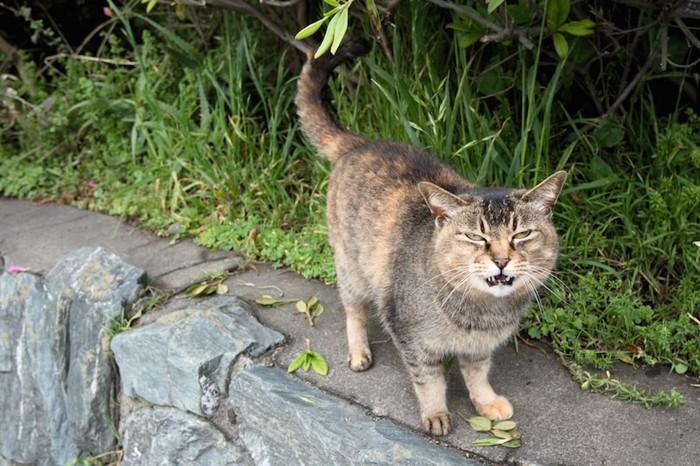 甘えて鳴く野良猫
