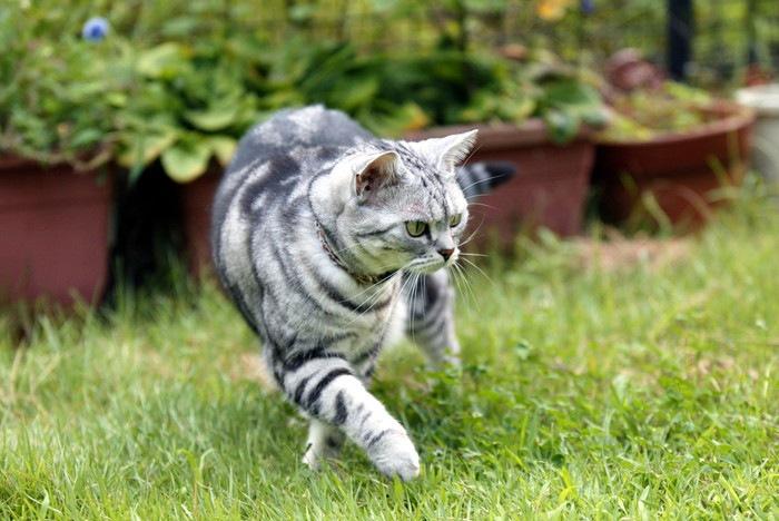 庭を歩く猫