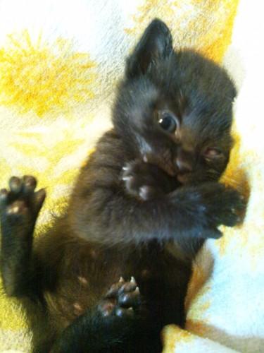 黄色いタオルの上の子猫の写真