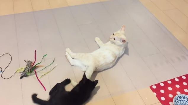 尻尾で遊ぶ2匹