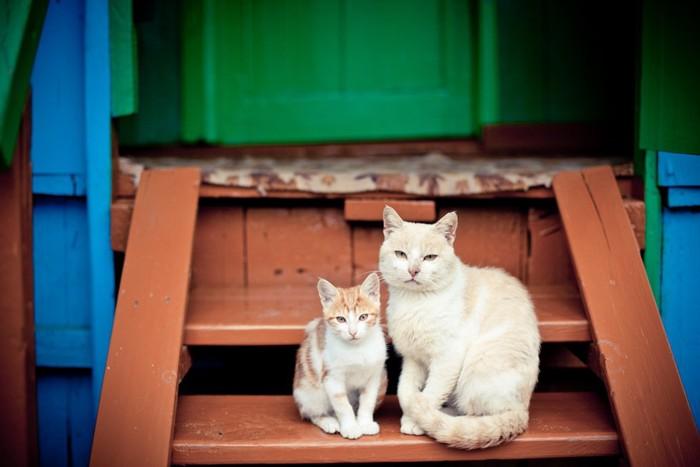 白猫の親子