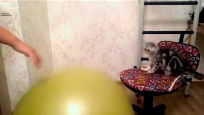 後ずさりする猫