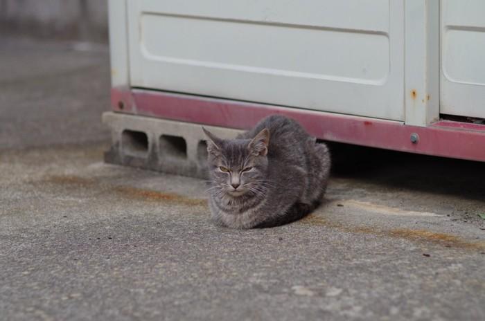 箱座りをしている猫