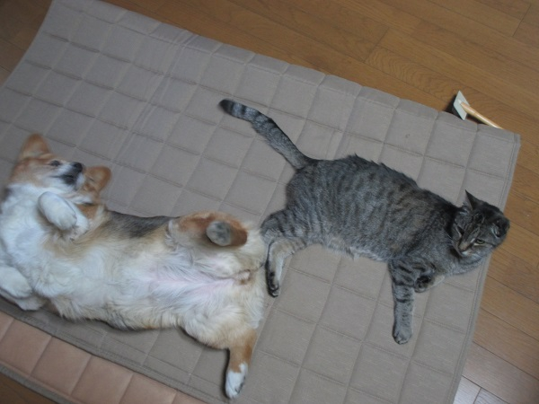 マキシーと犬