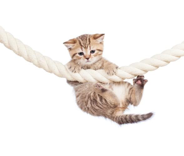 綱でぶら下がる子猫