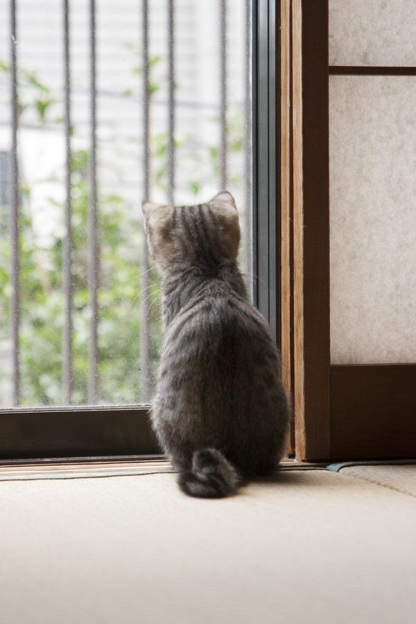 障子と後ろ向きの猫