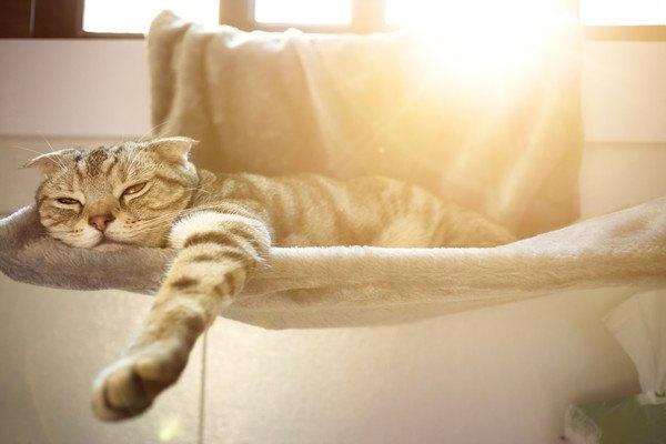 日だまりのベッドで眠る猫