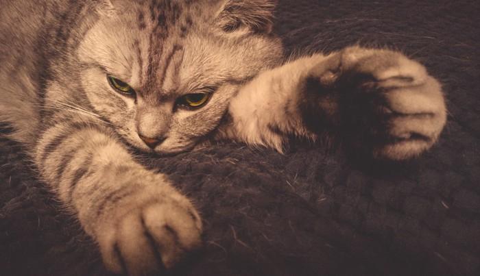 肉球アップのしょんぼり猫