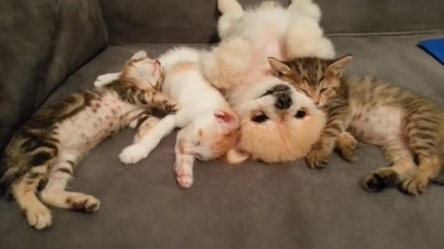 思い思いのポーズで寝る4匹