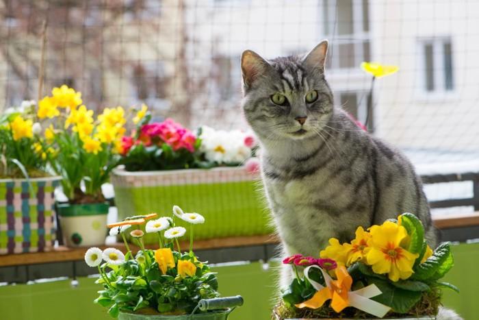 鉢植えのあるベランダにいる猫