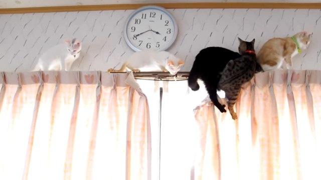 足を滑らす2匹の猫