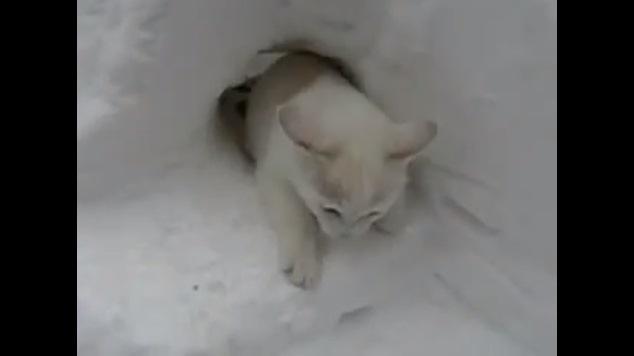 穴から出てくる猫