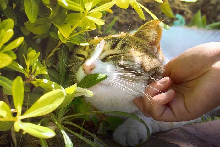 アゴを撫でられている猫