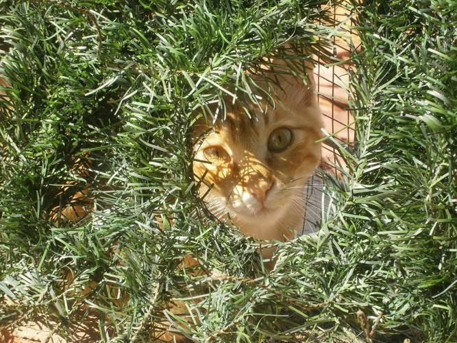草むらから覗き込んでいる猫