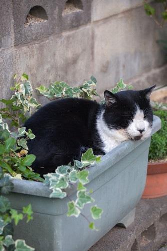 植木にいる猫