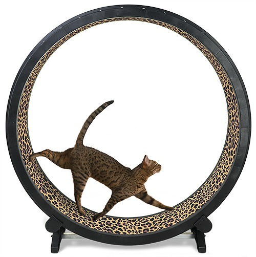 Cat Exercise Wheelの商品写真