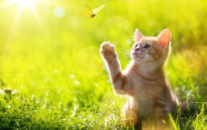 蝶々を捕まえようとしている子猫