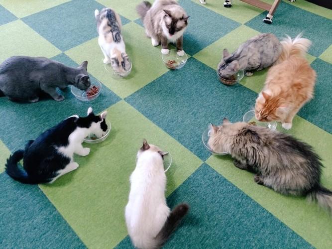 ご飯中の猫ちゃん達