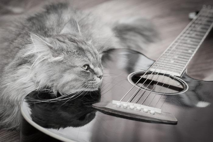 猫とアコースティックギター