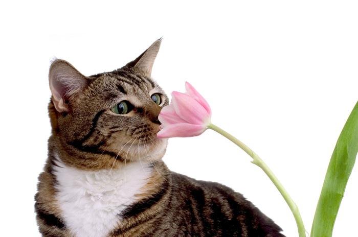花の香りをかぐ猫