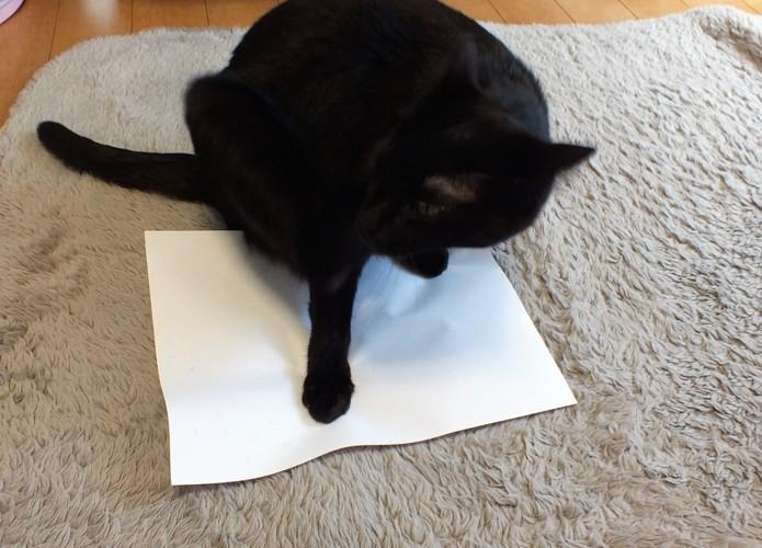 コピー用紙の上に猫