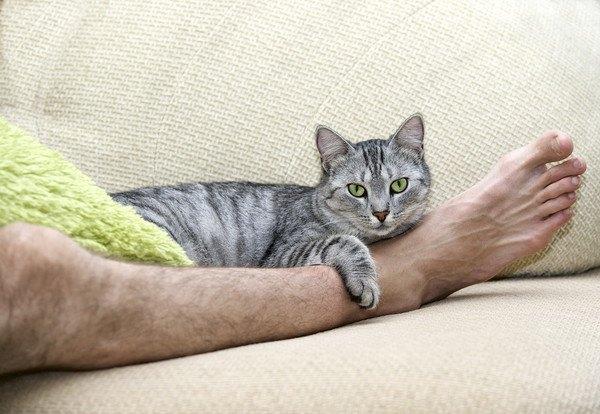 足の間にいるキジ猫