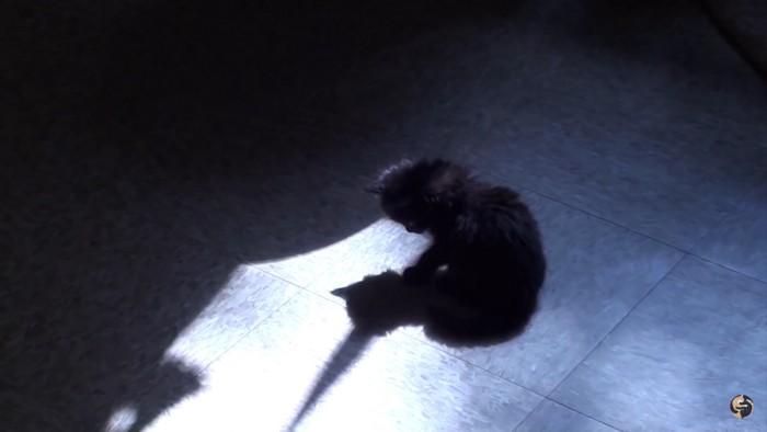 影を見る猫