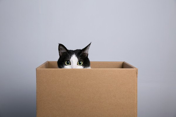 ダンボール箱に入って顔をのぞかせている猫