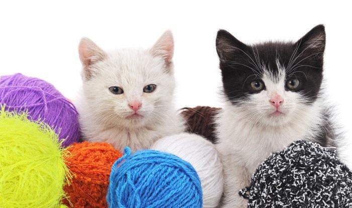 カラフルな毛糸と二匹の猫