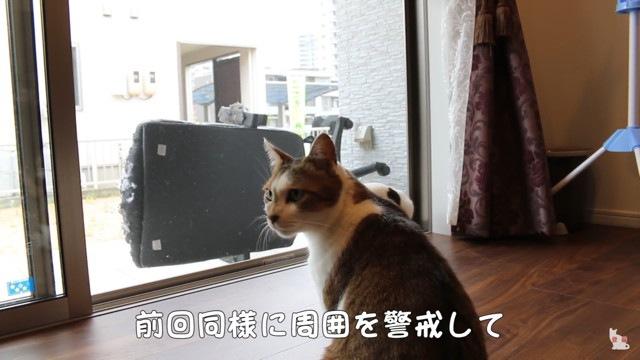 まわりをみまわす猫