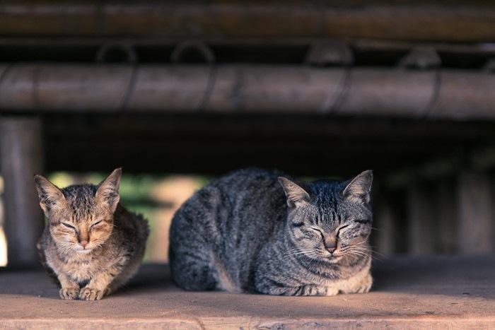 くつろぐ二匹の猫