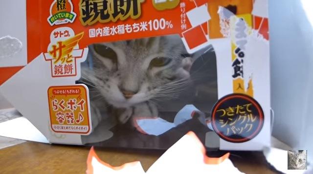 箱の中から見つめる猫