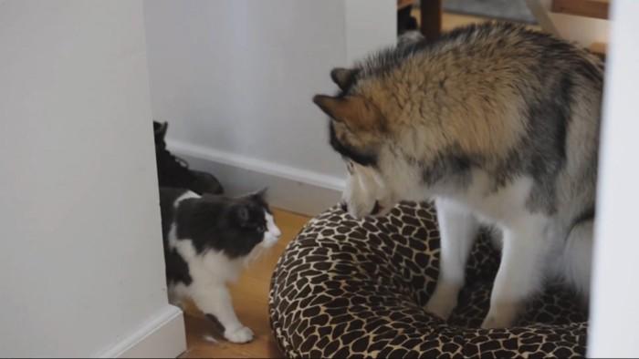 犬の寝床に近づく猫