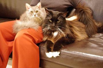 膝にのる猫さんたち