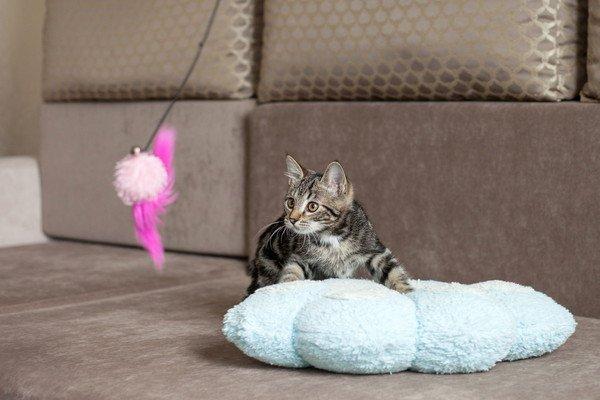 ふわふわのクッションの上に居る猫