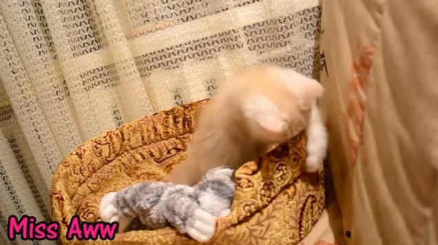 1匹で遊ぶ子猫