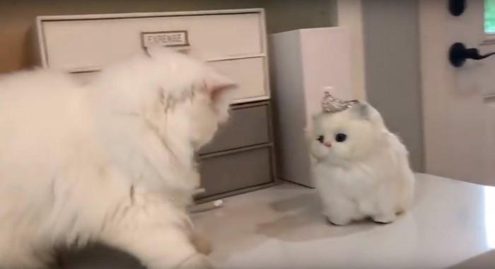 そっくりな猫