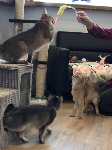 猫3匹と遊ぶ光景